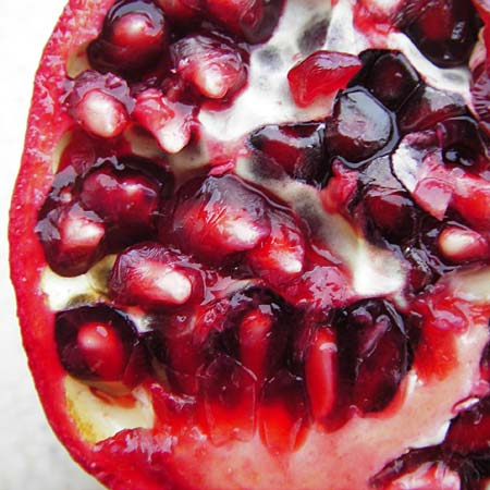 Punica granatum \ Granatapfel / Pomegranate, D  24.12.2014