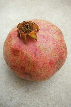 Punica granatum \ Granatapfel / Pomegranate, D  23.11.2014